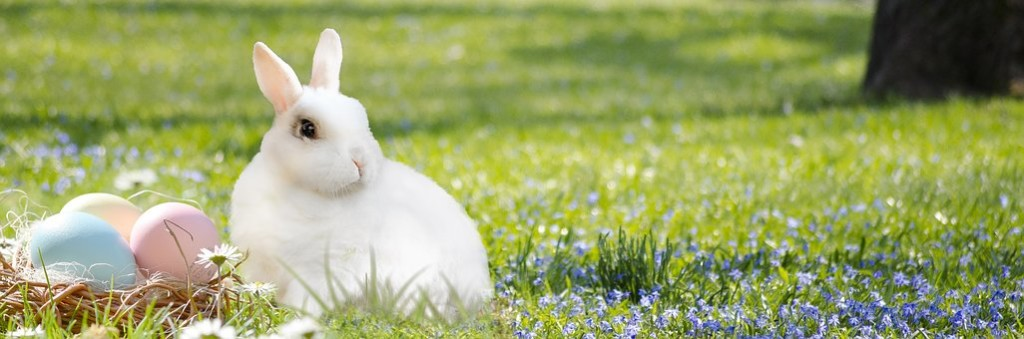 easter-bunny-3201433__340