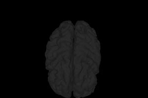 Gehirn ich wachse
